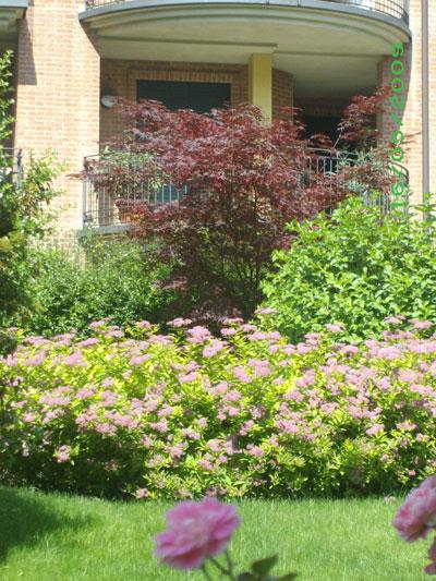 Giardini di musso progettazione e realizzazione giardini - Giardino condominiale ...